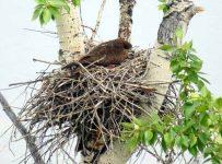 Птички, которые вьют свои гнезда из стороны Солнца