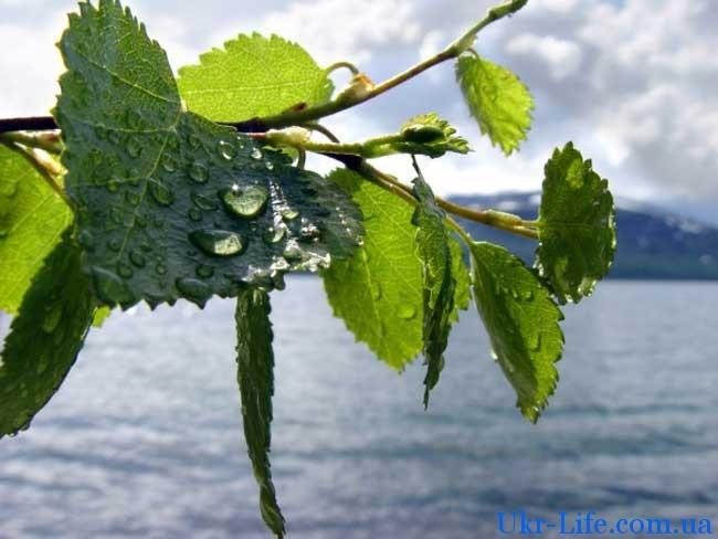 дожди станут достаточно редким явлением