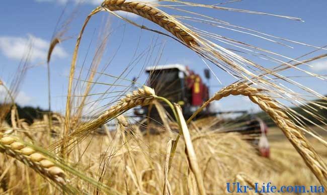 небывалый урожай зерновых