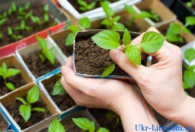 Люди, занимающиеся выращиванием овощей